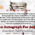 Blog Tour: AN AUTOGRAPH FOR ANJALI by Sundari Venkatraman
