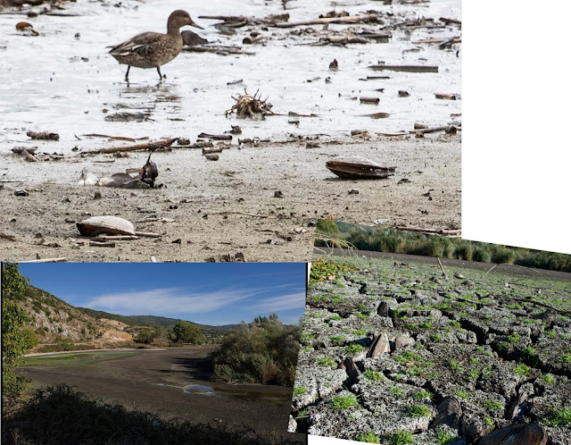 Γιάννενα: Οικολογική καταστροφή στην λίμνη Παμβώτιδα, λόγω ανομβρίας - Η στάθμη της λίμνης έχει υποχωρήσει κατά 1,20 μέτρα!!!