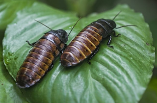 what is the purpose of cockroaches in nature