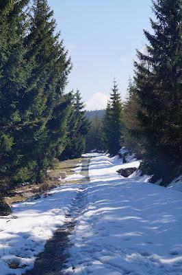 ścieżka w bieli