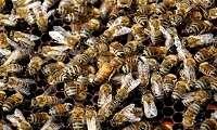 Νεκρός από τσιμπήματα μελισσών μετά από τροχαίο