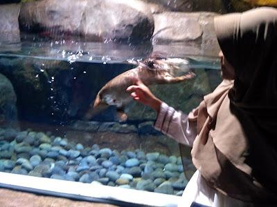 Mengunjungi Jakarta Aquarium Neo Soho