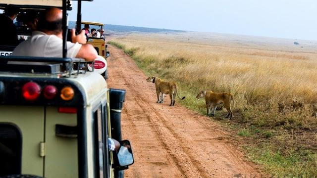 Viajes aventura, safari