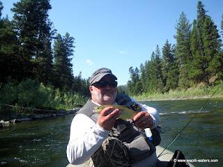 Blackfoot River July 17 – Bear swims across the river