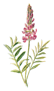 wildflower image flower illustration