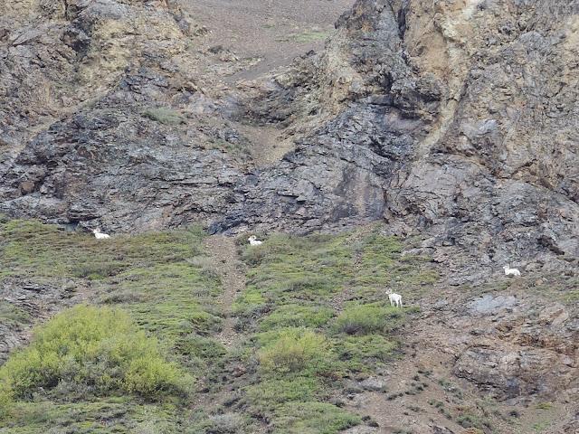 Denali national park 6