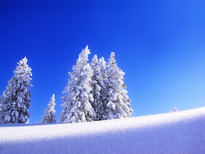 Mooie Sneeuw Achtergrond met bomen en blauwe lucht