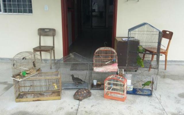 Onze animais silvestres foram apreendidos em Porto Seguro (Foto: Divulgação/Prefeitura de Porto Seguro)