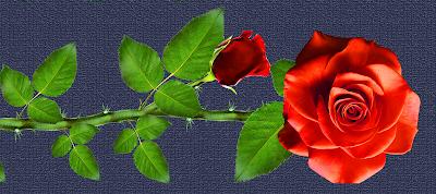 vector,flower,vector art,flower vector,vector flower PNG,vectors,vector lotus flower,illustrator flower,vector illustration,vector flower in photoshop,flowers, textile design,design,textile,flowers PNG,designs,designer,textile designs,floral textile design,textiles PNG