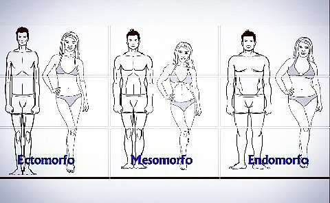 Endomorfo, Mesomorfo e Ectomorfo. Qual seu tipo físico?