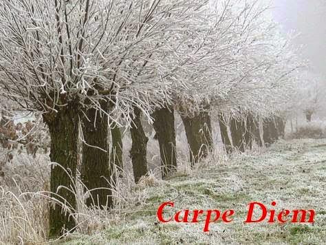 http://chevrefeuillescarpediem.blogspot.in/2015/01/carpe-diem-654-sheperds-purse-nazuna.html