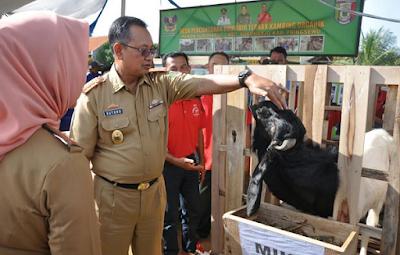 Gubernur Ridho Targetkan Lampung Menjadi Lumbung Ternak Nasional