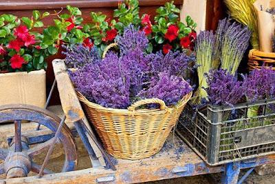Ervas afrodisíacas com aroma intenso e penetrante