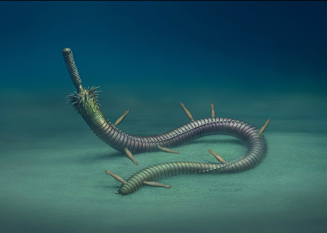 Infested fossil worms show ancient examples of symbiosis