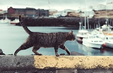 Kemana Kucing Saat Mati dan Banjir, Ini Faktanya