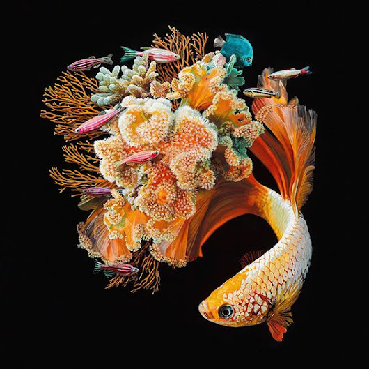 Hyperrealistic Fish Painting By Lisa Ericson