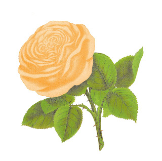 rose artwork antique illustration digital art botanical image