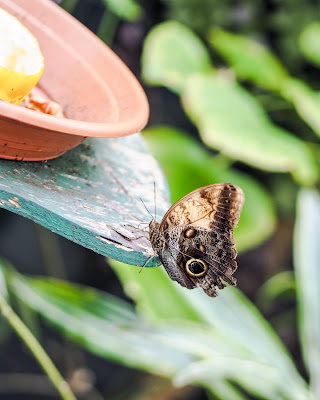 butterfly at tropical world