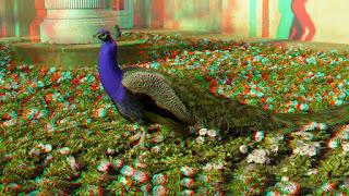 3D peacock bird hq wallpapers