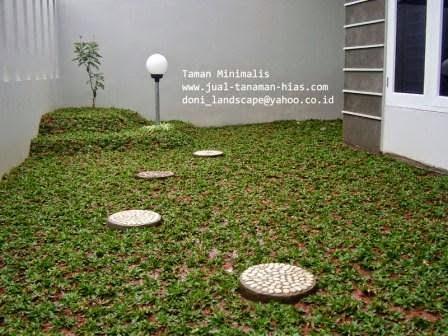 JUAL RUMPUT TAMAN, GRASS SEED | BENIH RUMPUT GAJAH MINI KWALITAS BAIK