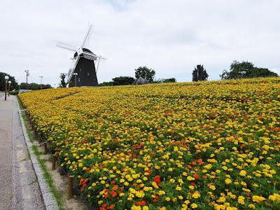 花博記念公園鶴見緑地 風車とマリーゴルドの大花壇