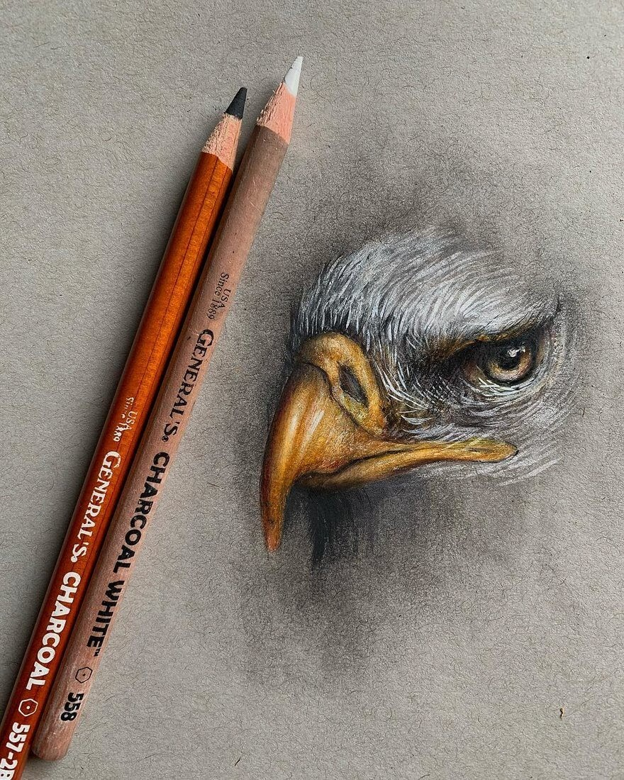 09-Eagle-Jonathan-Martinez-Animal-Drawings-with-Colored-Pencils-www-designstack-co