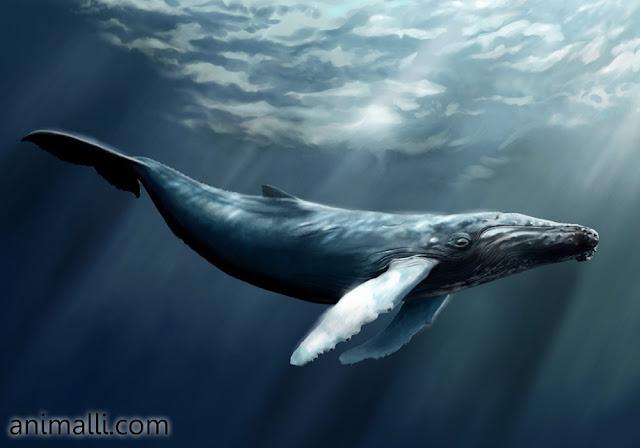 Ikan Paus, Mamalia Yang Hidup di Lautan