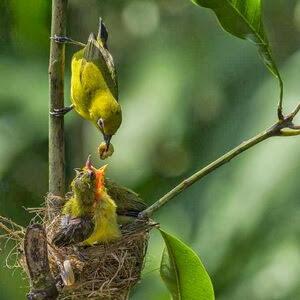 Ide Peluang Usaha Jualan Pakan Burung Bisnis Modal Kecil