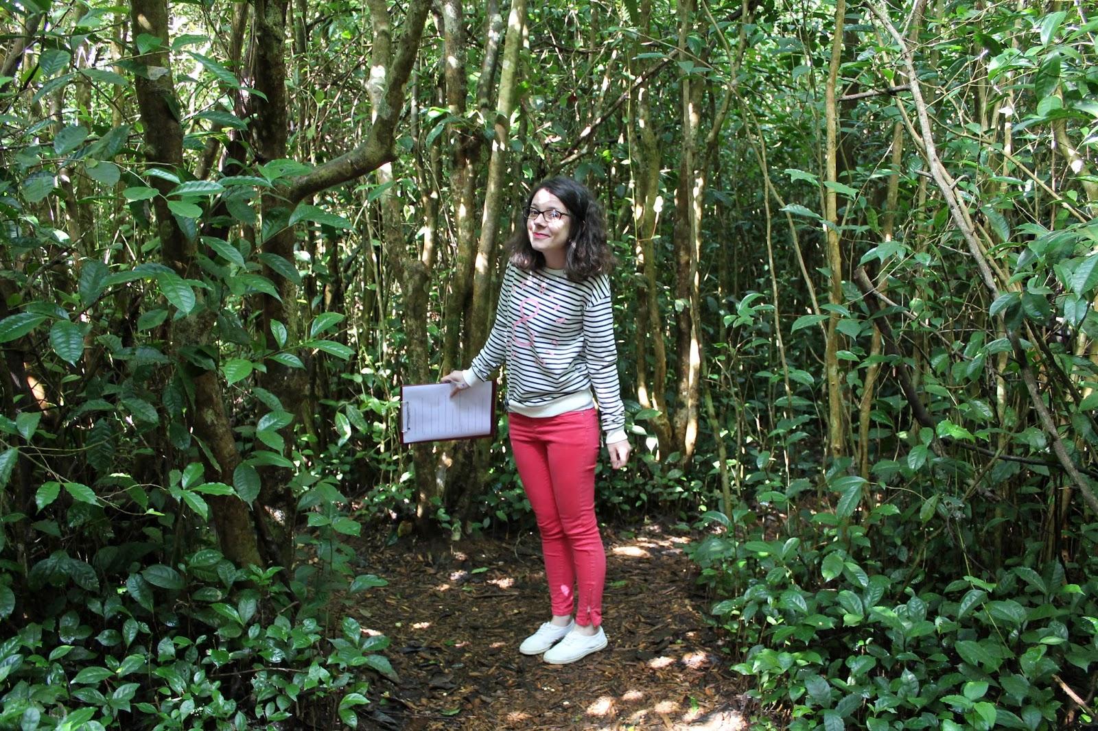 réunion île gotoreunion labyrinthe en champ thé tea grand coude visite à faire jumbocar irt tourisme 974 kiabi camaieu haul soldes
