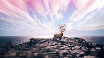Deer, 4K, 3840x2160, #55