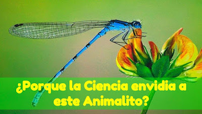 Animal Acrobatico