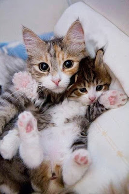 Cats Hugging
