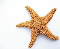 Bintang Laut (Starfish)