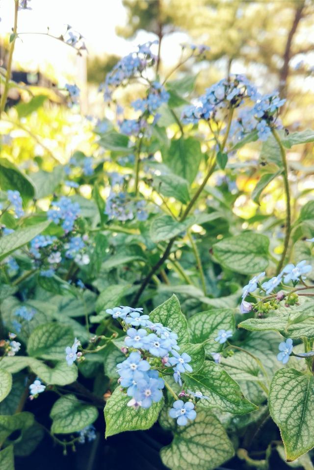 Tiny blue flowers.