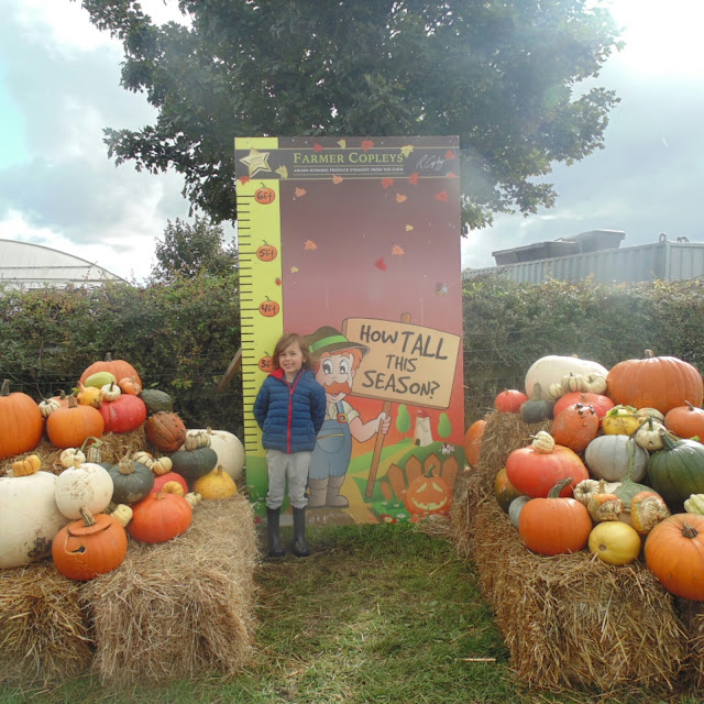 Pumpkin picking at farmer Copleys