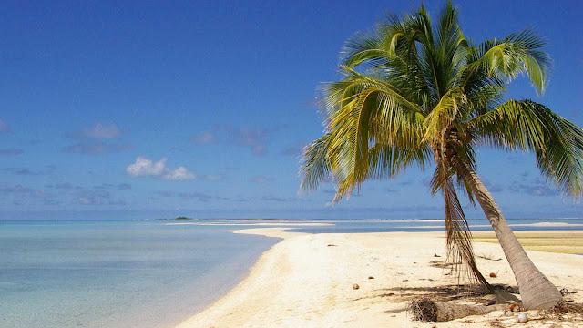 gambar wallpaper pohon kelapa dipantai