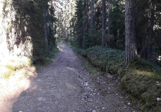 Metsämaisema Liimanninkoski Muhos