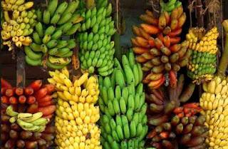 pisang unggulan