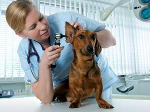 Hindari Infeksi dari Hewan Peliharaan