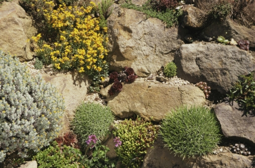 Succulent Rock Garden Ideas Photograph Succulent Rock Gard