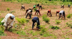 Towards ensuring agricultural development and its value added chains in order to ensure food security, the Ogun State government has commenced a training workshop for farmers, students in food crops and fish farming at its training facility at the Odeda Farm institute in Abeokuta.