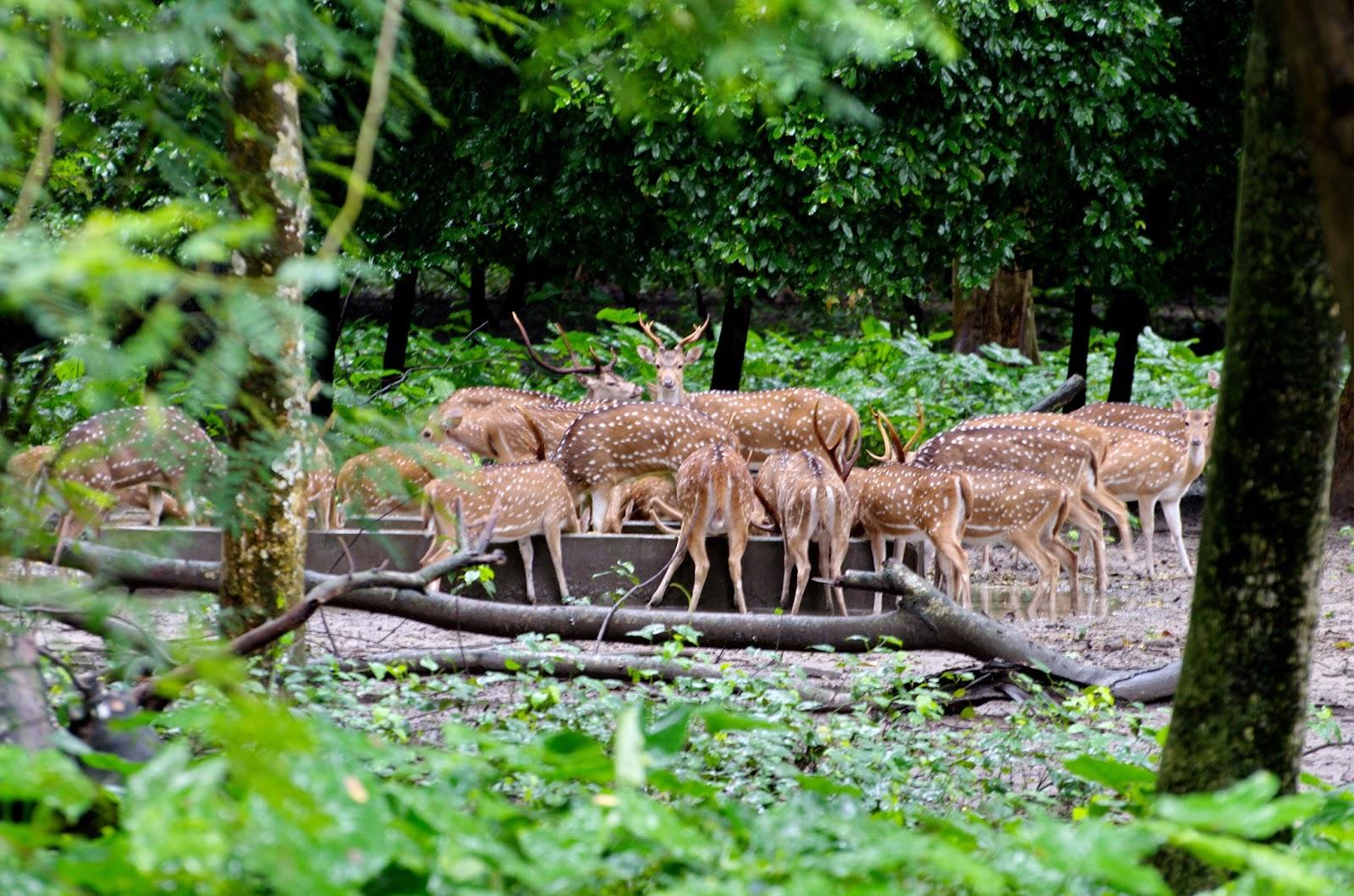 Image result for পারমাদান west bengal