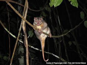 Night tour in rainforest