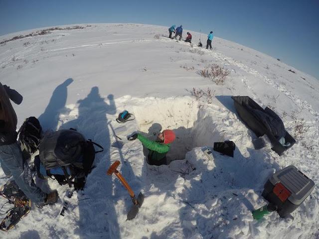 Arctic greening thaws permafrost, boosts runoff