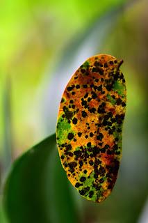 colorful tropical leaf
