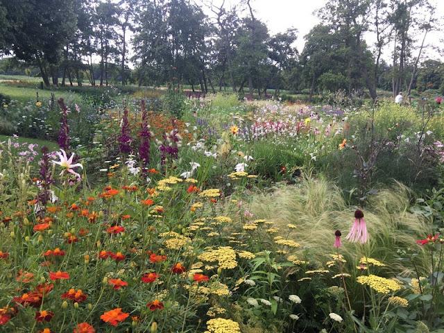 Helenium, sedum y otras vivaces en flor en jardín museo voorliden diseñado por Piet Oudolf
