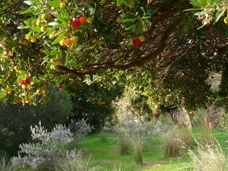 Jardín de California. Jardin plantas clima mediterráneo (Domaine du Rayol) diseño: Gilles Clement