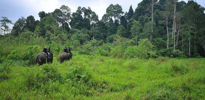 Upaya Pelestarian Ekosistem In Situ dan Ek Situ