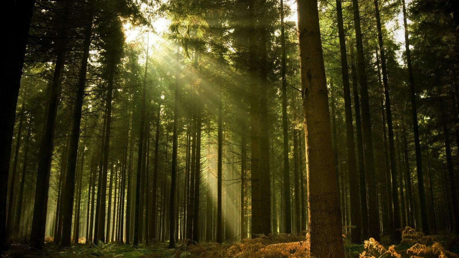 Desvirgada e el boske