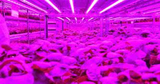Neste bio-bunker Panasonic cultiva os vegetais do futuro